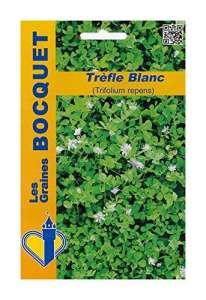 Les Graines Bocquet – Graines De Trèfle Blanc (Trifolium Repens) Pour 40M² – Graines Potagères À Semer – Sachet De 100Grammes