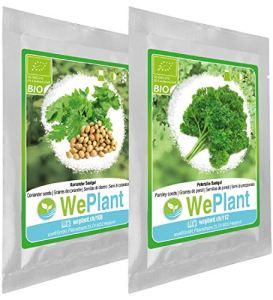 BIO Coriandre & Persil – Graines de plantes aromatiques/Intérieur & Extérieur