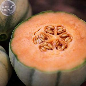 Go Garden BELLFARM Bonsai e Lot de 20 délicieux Gourmet en Forme de cœur