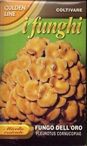 franchi sementi Miel séché de Champignon de l'or en boîte de 100 grammes