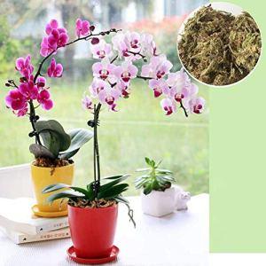 libelyef Dry Moss Water Moss Substrats d'herbe d'eau pour Mousse De Mousse Sèche pour Phalaenopsis Paillis Et Supports De Plantation D'orchidée (6L) Proficient Elegant