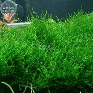 Pinkdose Bellfarm Bonsai Rare 25 Types Aquarium Herbe vivace aquatique de poissons d'eau TANK haute Germination 100pcs / paquet: NF348xT24