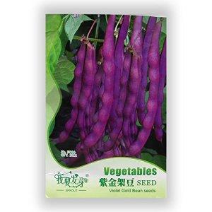 20graines/semences de alcaravea Paquet de légumes organique chinois semences de légume saveur semences de recouvrement balcon