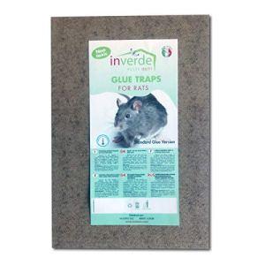 Plaques de glu en bois anti souris anti rat lot de 2 pièges – 19x28cm