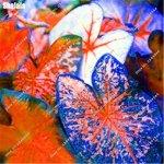SwansGreen Lot de 100 graines de fleurs comestibles