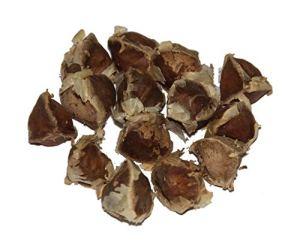 Graines De Moringa En Sachet – 50 Graines Bio – Seeds