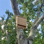 HD-Crafts Bat House Boîte à Chauve-Souris en cèdre fabriquée à la Main aux États-Unis