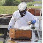 Adesugata Apiculture Outil, Acier inoxydable Bee Hive Fumoir Apiculture Fumoir