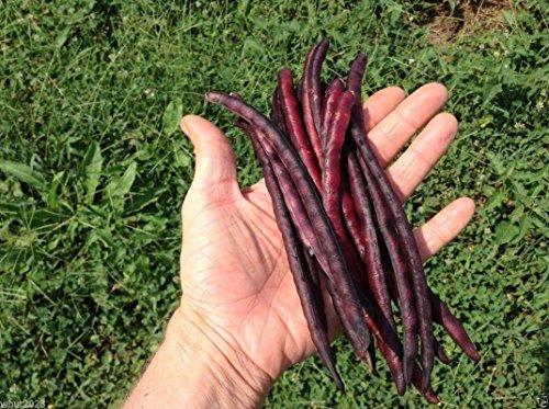 Cow-pois « Pink Eyed Violet mondés (5 Lb Seeds) Pois AKa du Sud, organiques