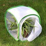 ACAMPTAR Insecte Et Papillon Habitat Cage Terrarium Apparaitre 12 x 12 x 12 Pouces (Blanc + Vert)