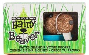 Hairy Beaver- Faites Grandir Votre Propre