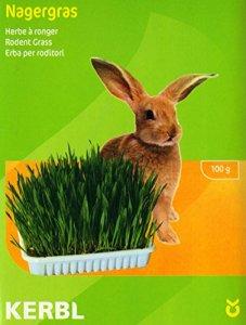 Muki Graines d'herbe pour lapins ou petits animaux de compagnie, lot contient un plat et un sol (substrat minéral)