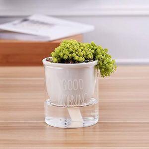 SPLLEADER 1pc d'arrosage Automatique Planteur Pot en céramique Pot de Fleurs avec des conteneurs en Verre d'eau for Les Plantes Vertes Succulent Plant Cactus Fleur Plante (Color : WS)