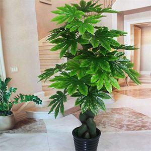 TENGGO Egrow 240 Pcs/Pack Fatsia Japonica graines d'arbres Fatsia Japonica Arbre Semente Plante arbuste Arbre