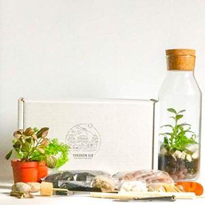 Kit terrarium avec récipient en verre et couvercle en liège – Mini jardin – Idée cadeau – Kit bricolage Complete Set with Tools, Fern, Fittonia