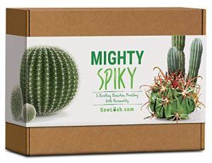 Mighty Spiky Kit de graines de cactus Tout ce dont vous avez besoin pour faire pousser 5 beautés en poils emballés avec de la personnalité.