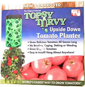 Allstar Marketing Group TV222041 Plante à tomates