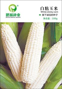 L'original de couleur des grains d'emballage collantes semences de maïs coloré délicieux 100 grammes / sac doux