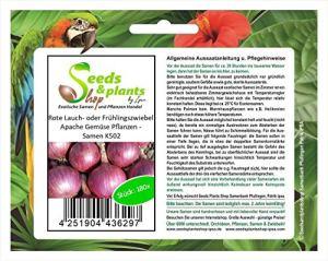 Pcs – 180x Rouge Lauch- Ou Frühlingszwiebel Apache Légumes Plantes – Graines K502 – Seeds Plants Shop Samenbank Pfullingen Patrik Ipsa