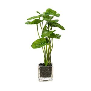 xuanxuajia Plante Artificielle Plante Artificielle Interieur Table Décoration Artificielle Cactus Plantes en Pots Plante d'intérieur Faux Plantes en Pots Green 2