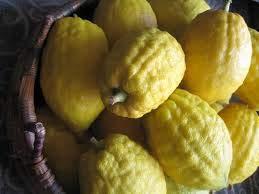 Alick 5 graines de fruits Citron Citrus Etrog Esrog jaune.