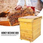 Jacksking Beehive, Cedar Wood Honey Keeper Beehive Boîte complète Boîte de 10 Cadres pour l'apiculture Kit Outils d'apiculture pour débutants et apiculteurs Professionnels