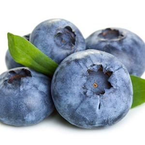 Vaccinium corymbosum BRIGITTA BLUE   Myrtillier   Arbuste fruitier   Hauteur 30-60cm   Pot Ø 13cm