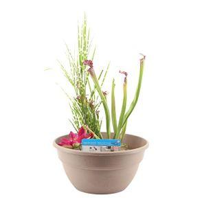 3x Plantes aquatiques avec mini-bassin taupe – Kit BASSIN PAISIBLE | Lobélie, Jonc, Mazus | Plantes pour bassin de terrasse | Hauteur livraison 10-50 cm | Bassin Ø 18cm