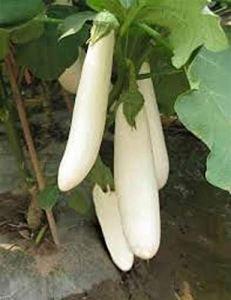 Alick 50 graines de légumes d'aubergines longues blanches