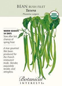 Tavera Bush Bean Seeds – 15 g – Certifié bio
