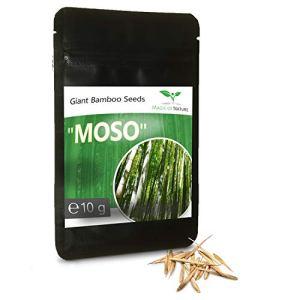 10 Gramme BAMBOU GEANT MOSO env. 350 graines/Phyllostachys pubescens /»Roi des Bambous»