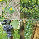 HUTHIM Treillis Jardin Filet, Support Plante Grimpante Filet 2m x 5m, Convient pour Concombres, Tomates, Recolte Filet de Grimpantes Plantes. Utilisé dans Les Serres, Les Balcons etc.