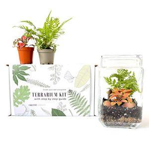 Kit de terrarium avec récipient en verre en option Fittonia, tapis, mousse, fougère, idée cadeau pour la maison, le bureau, décoration (kit avec fougère et fittonia)