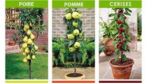 Lot de 3 Arbres Fruitiers : Poires, Cerises et Pommes