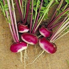 Graines de navet violet Milan – Environ 3500 graines de légumes/fruits