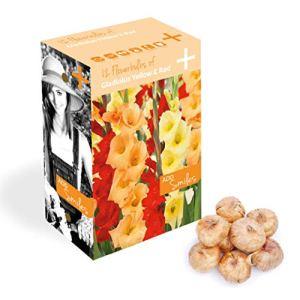 Plant & Bloom bulbes de glaïeuls des Pays-Bas, 12 bulbes – Facile à cultiver – Pour les semis de printemps dans votre jardin – qualité néerlandaise – Fleurs rouges et jaunes