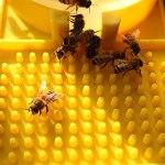 3 pièces d'abreuvoir, fournitures apicoles multifonctionnelles en plastique jaune, système d'alimentation liquide, outil d'apiculture, abreuvoir de ruche, équipement d'alimentation