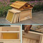 GFFTYX Bee Hive – Set en Bois Ruche avec 5 Cadres Nest Finis for Les débutants et Les Professionnels Apiculteurs 33.5x37x40cm