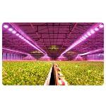Luce di riempimento per piante,Lampada per la crescita Delle piante,lampada per piante,lampada per piante a LED per piantine di Orchidee succulente vegetali in Serra.