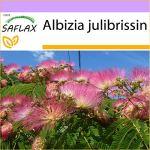 SAFLAX – Albizia – 50 graines – Albizia julibrissin