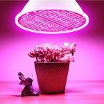 CalmGeek Ampoule LED pour plantes d'intérieur, rouge et bleu, Spectrum 200 LED, E27, lampe de croissance pour plants hydroponiques, plantes succulentes, légumes, serre (85 265 V)