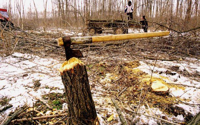 Orăştie. Sancționaţi pentru tăiere ilegală de arbori