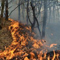 Pompierii și pădurarii hunedoreni luptă cu două incendii la fond forestier izbucnite în nordul și sudul județului