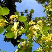 Primăvara vine la pachet cu alergiile: Cum faci diferența între o alergie și COVID-19