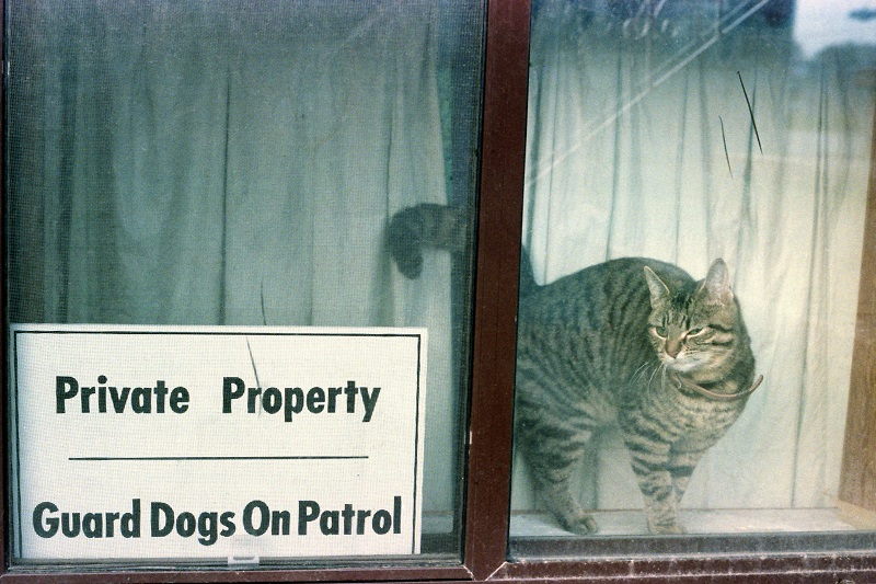 cat, humour, animals, sign, guard dogs, Avard Woolaver