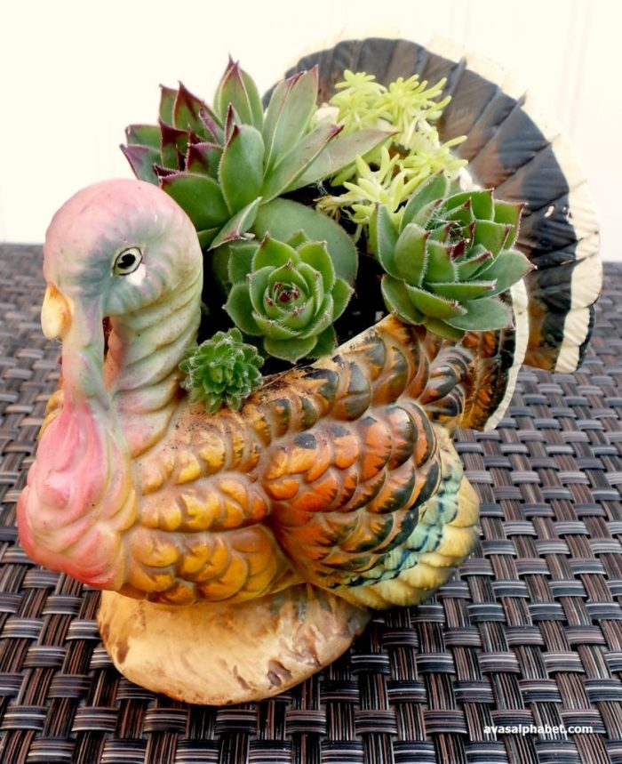 Vintage Turkey Succulent Planter