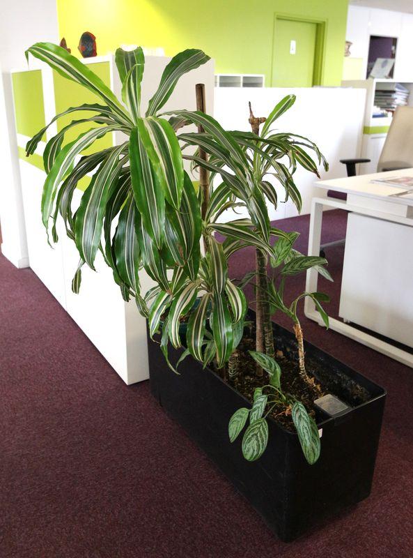 Plante Verte Dinterieur Dans Sa Jardiniere Rectangulaire
