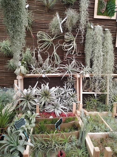 Plantas de aire variadas