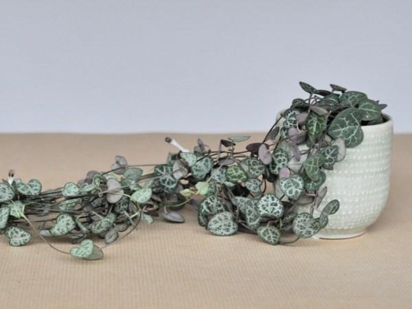 """Billet """"Semer plus de 100 idées vertes"""" paru sur www.avecpanache.ch"""