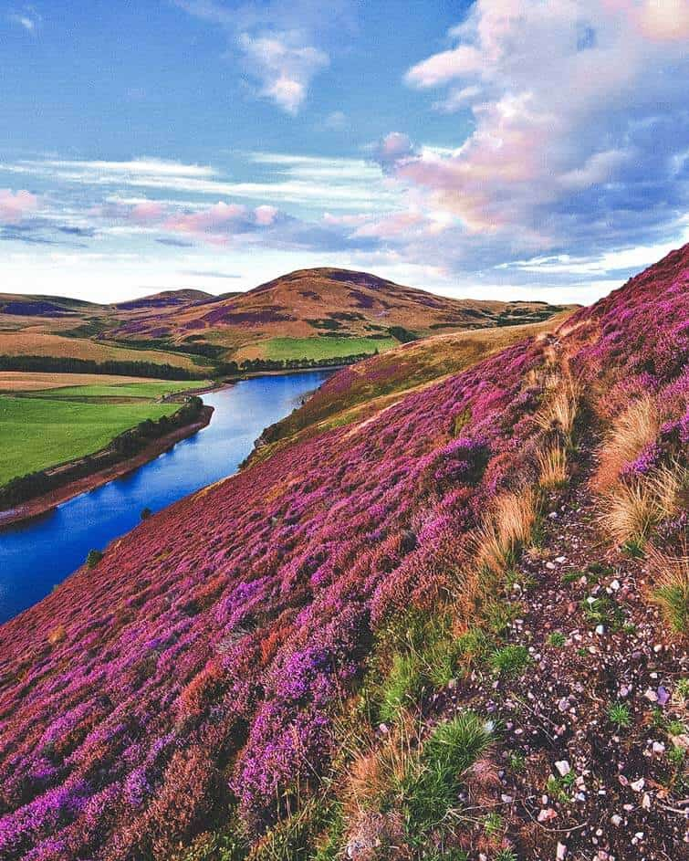 The green valley river mountains in the Pentland Hills covered by violet heather flowers. Click through to see 28 mind blowing photos of Scotland!